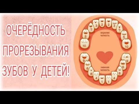 Очередность прорезывания зубов у детей!