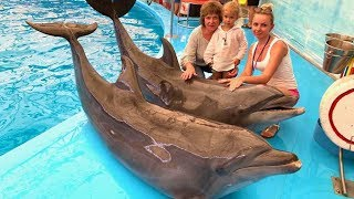 SHOW OF DOLPHINS DOLPHINARIUM in Thailand Phuket. Video for babies and children. Children's songs