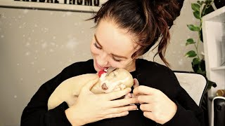 MY NEW PUPPY: Picking up my ITALIAN GREYHOUND PUPPY from the airport