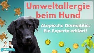 Atopische Dermatitis beim Hund: Alles zu Allergietests, Desensibilisierung und Cytopoint