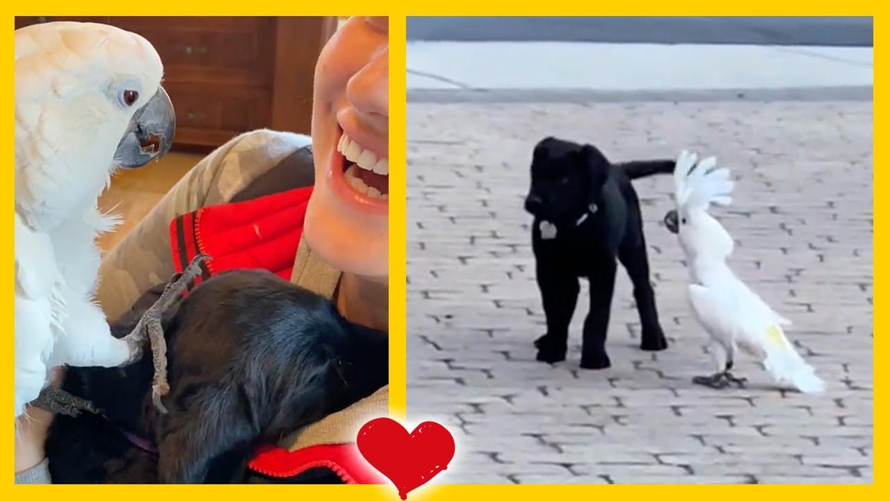 Cacatúa está encantada con su nuevo hermanito perro 💚