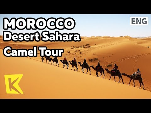 【K】Morocco Travel-Desert Sahara[모로코 여행-사하라사막]낙타 투어/Camel Tour/Desert/Oasis/Tent/Camp/Mint/Tea