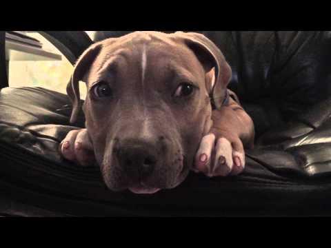 man-talks-barking-puppy-to-sleep-in-one-minute-!!