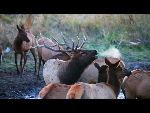 Bowhunting Missouri Breaks Bulls 2