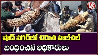 Leopard Rescued In Shadnagar  Telugu News