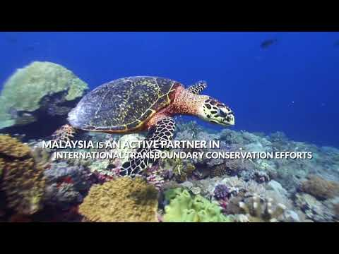 UNDP: Financing for Protected Areas
