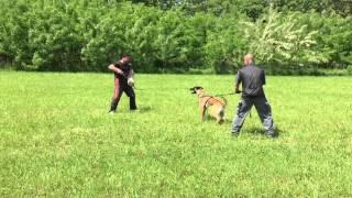 www.addestramentopensionecanitorino.it - La Tana dei Lupi - aus der Krummholz