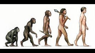 Ape to Man Documentary