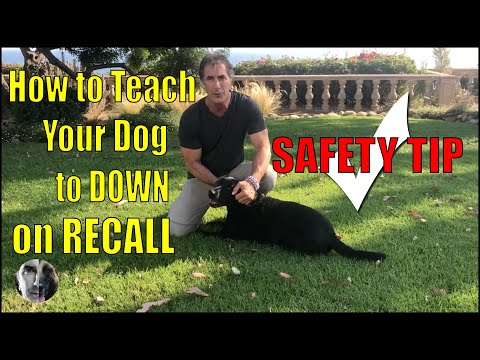 How To Teach a Dog Drop on Recall - Dog Safety Tip - Dog Training Video