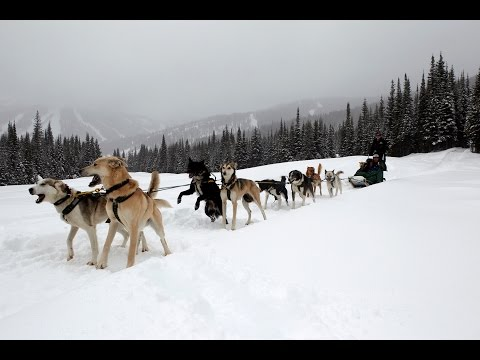 How to drive a dog sled, Sun Peaks, BC, Canada