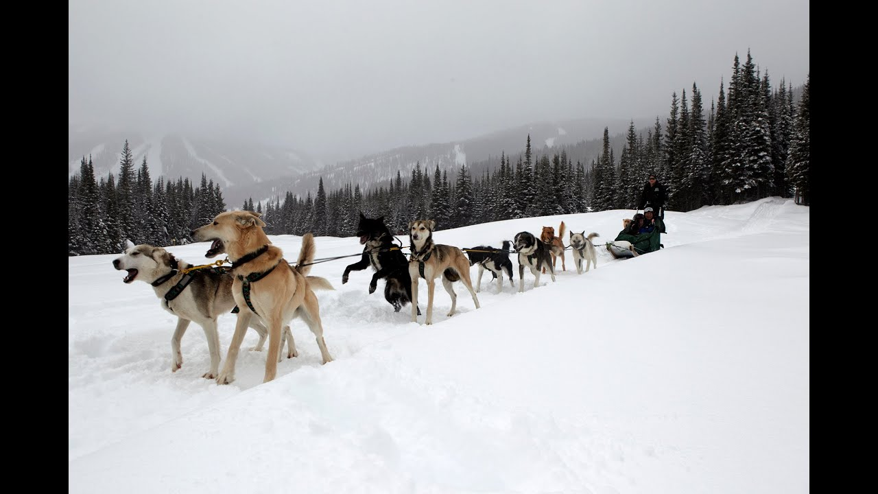 How to drive a dog sled, Sun Peaks, BC - Dog Sledding in ...