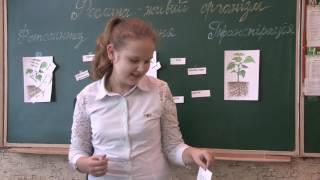 Урок біології