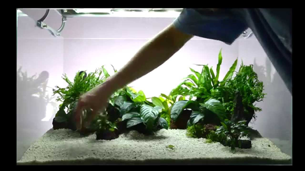 Bitkili Akvaryum Kurulumu - Tropica Dizayn 46 - 200 Litre