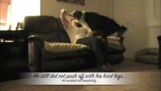 Rebound Dog Trick: Clicker Dog Trick Training