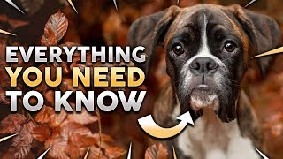 BOXER DOG 101! The Clown Of The Dog World!