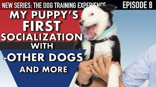 my-new-puppy-how-i-socialize-my-puppy-around-everything-dog-training-experience-ep-8