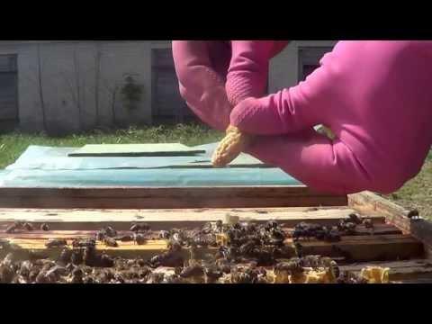 Powiększamy Pszczele Rodziny - Podlaskie Miody
