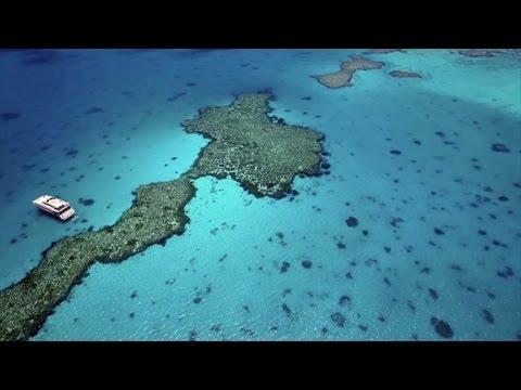 Grande Barreira de Corais avaliada em EUR 37 bilhões
