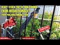Murai Konslet Ekor Panjang Panen Trotol Ring Oxibird  Mp3 - Mp4 Download