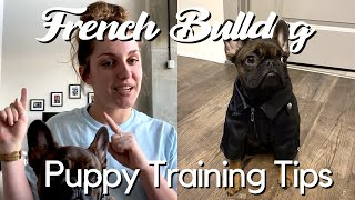 French Bulldog Puppy Training Tips | EXPLAINED + STORY TIME