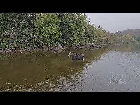 Northern Ontario Moose vs Wolf