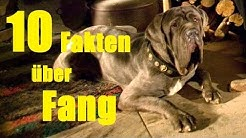 10 FAKTEN über FANG 🐶