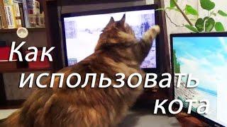 Как можно использовать кота?
