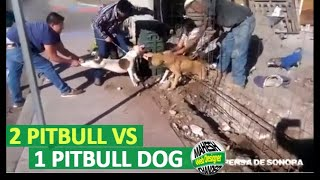 Best Pitbull Dog Fight Ever