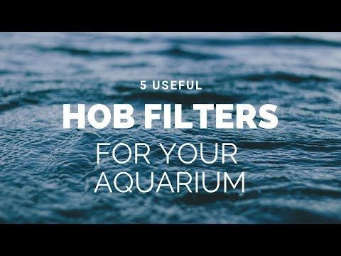 5 Useful HOB Filters For Your Aquarium