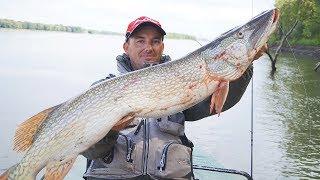 О такой рыбалке можно мечтать! ЩУКИ-МОНСТРЫ В ЛОМОВОМ КОРЯЖНИКЕ!