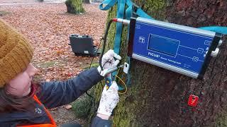 Ekspertyza dendrologiczna - Barlinek, Pracownia Przyrodnicza SOSENKA, badanie drzew, tomograf