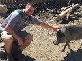 Animal Adventures with Jordan: African Warthog