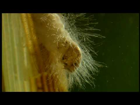 Conflicts of Nature : Conflicts in a Pond - Wildlife Documen