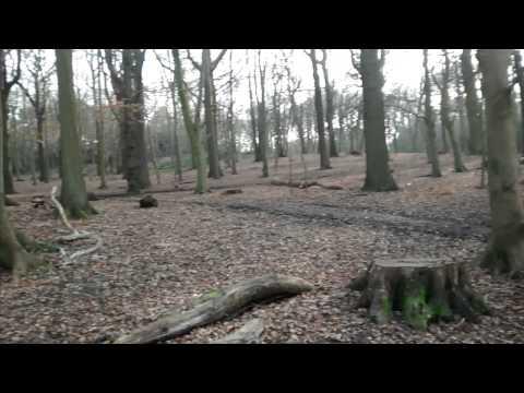 Croham Hurst Woods - South Croydon.