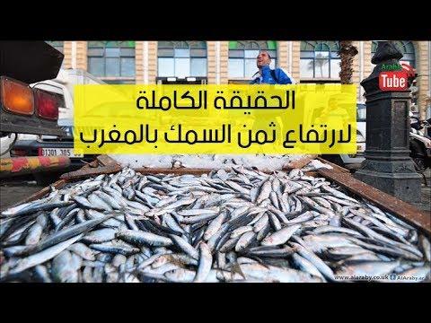 الحقيقة الكاملة لكيفية ارتفاع ثمن السمك بالمغرب