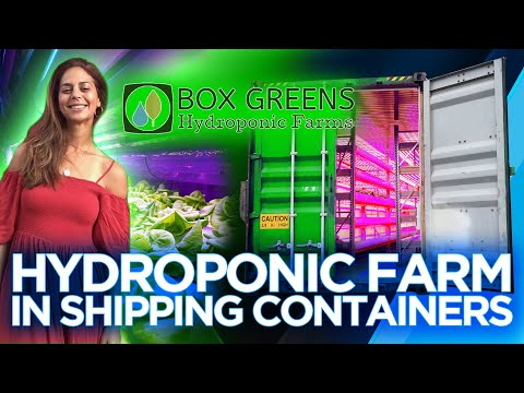 Box Greens Hydroponic Farms In Shipping Containers - Sustainable Sourcing | The Barron Report