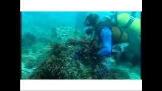 Pollution en Méditerranée : stop ou encore