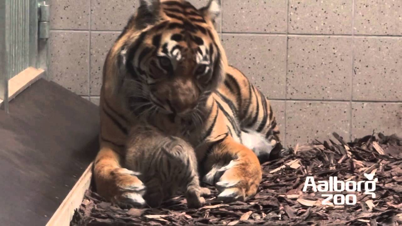 blærebetændelse og samleje Aalborg Zoo rabat