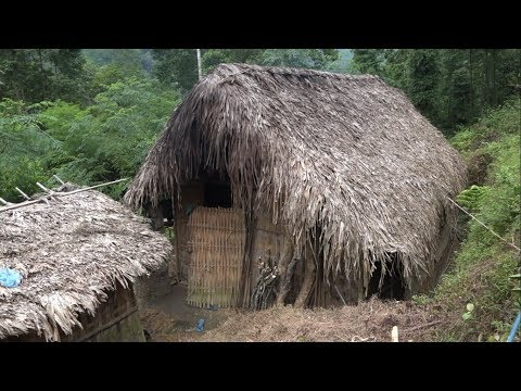 Harvesting wild bamboo shoots, specialty Vietnam, episode 2