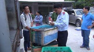 Tin Tức 24h: Kiên Giang bắt trên 200kg tôm bơm tạp chất