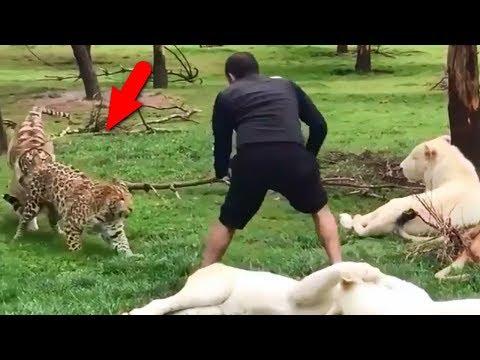 видео: Когда не зассал и заступился - животные. Часть 2