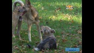 Бездомные собаки - реальная опасность