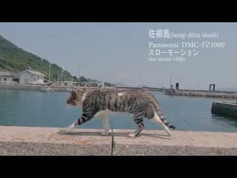 Thumbnail for Cat Video Slow Motion Cat on Sanagishima Island