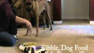 Dog Obedience: Dumbbell Foundation Skills