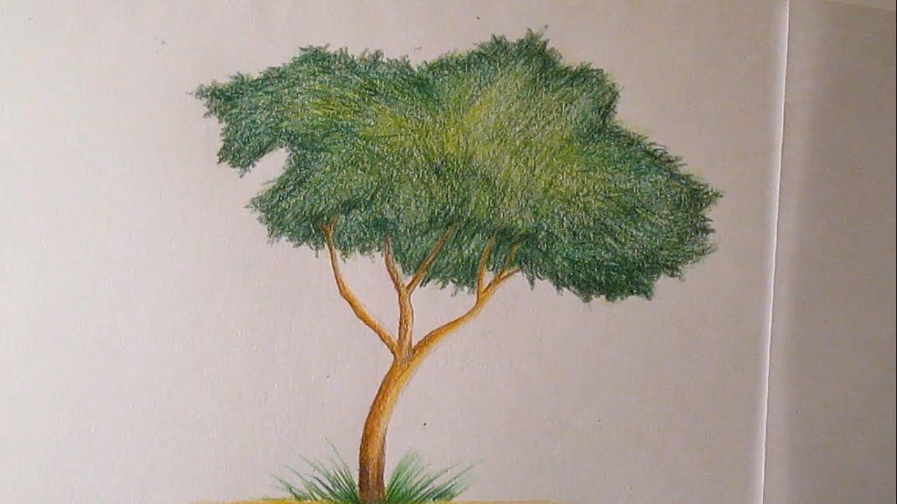 Cmo dibujar un rbol con lpices de colores paso a paso dibujo