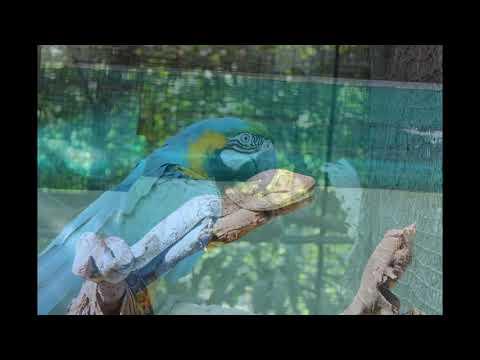 Myanmar, Yangon Zoo (Yangon zoological garden)