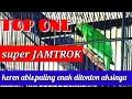 Super Jamtrok Aksi Cucak Ijo Top One Entah Apa Yang Merasukimu  Mp3 - Mp4 Download
