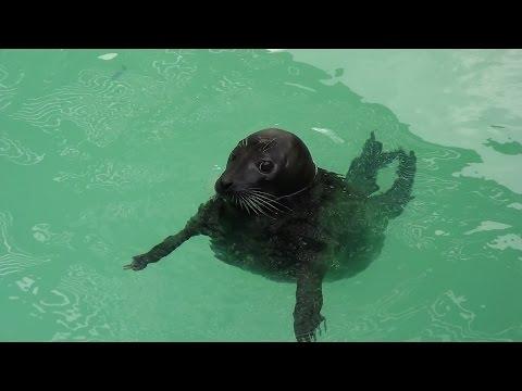 Video #158 Bermuda Aquarium and Zoo