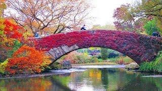 Fall in Central Park, New York, full ᴴᴰ █▬█ █ ▀█▀