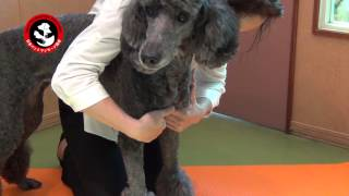 Japan Pet Massage Association・BASIC ROUTINE ③